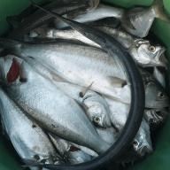 Firari_balıkçı