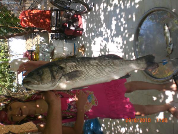 levrek balık 012