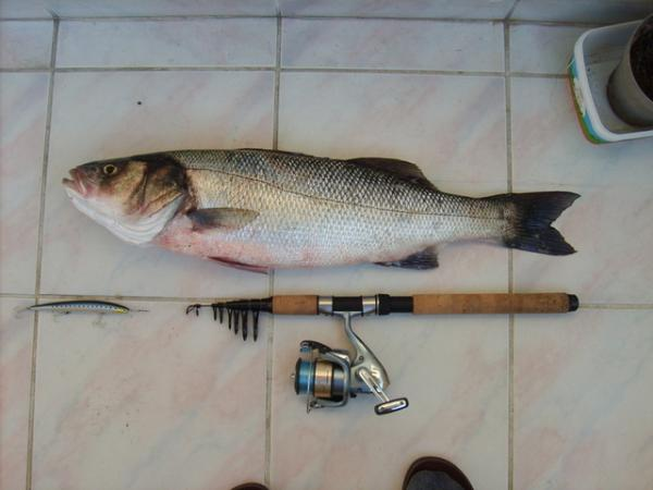 Rekorum,73cm/4 kilo