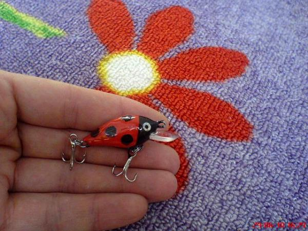 Uğur böceği  DSC04876