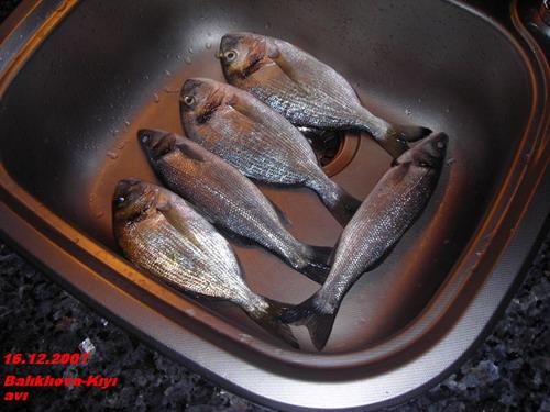 16.12.2006 Kıyı avı