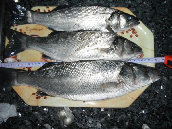 01.01.2012 kıyı avı