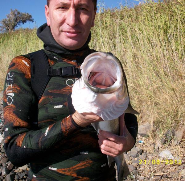 Yutan Balık Levrek 08 002
