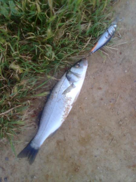 Balık0268
