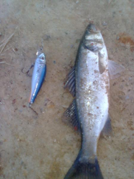 Balık0269