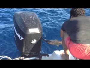 suat yiğit akya avı 2013 adrasan