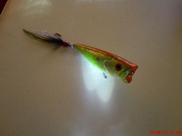 Fly Popper turuncu sırt  dsc05638i
