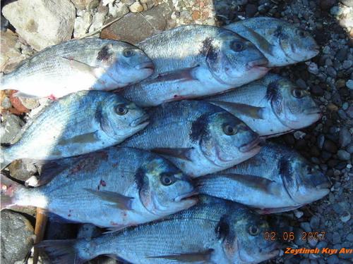 02.06.2007 Kıyı avı