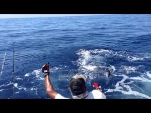 suat yiğit yelken balığı avı