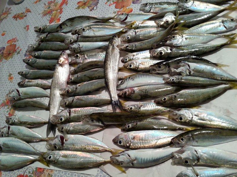 balık sevdam 003.jpg