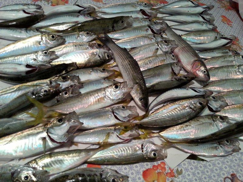 balık sevdam 004.jpg