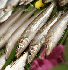 kisu fish.jpg